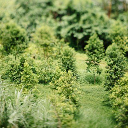 Bäume. Foto von chuttersnap auf Unsplash